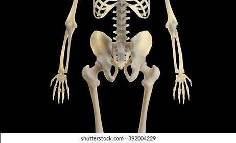 Section Skeleton Bottom Previous