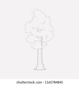 Sequoia icon line element.  illustration of sequoia icon line isolated on clean background for your web mobile app logo design.