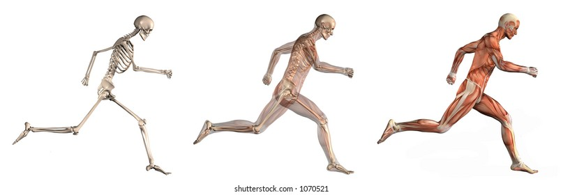 Series of three anatomical 3D renders depicting a man running, viewed from the side. These images will line up exactly, and can be used as overlays to study anatomy.