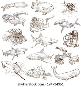 From series: Underwater and Marine life (set no.1) - Collection of an hand drawn illustrations. Description: Full sized hand drawn illustrations drawing on white background.