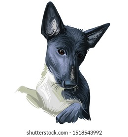 Seskar Seal dog hound animal digital art. Seiskarinhyljekoira pet originating from Finland, watercolor portrait closeup of Finish domesticated animal with sharp ears type. Hand drawn canine doggy.