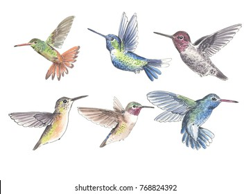 Set of 6 hummingbirds painted with watercolors and ink on white background. Elements for design.