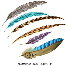 a set of 6 watercolor feathers. accurate illustration, vintage style. blue jay, peacock, pheasant, turkey