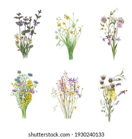 Set of 6 watercolor painted realistic bouquets of meadow flowers isolated on white background.