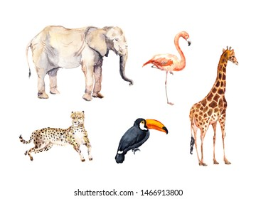 Set of african wild animals, birds - zoo, wildlife. Giraffe, cheetah, toucan, flamingo, elephant.  Watercolour