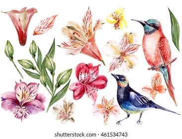 Set of alstroemeria and birds. Illustration