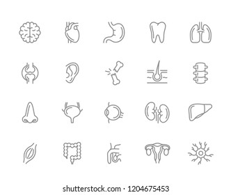 Set of anatomy and organs line icons. Neuron, penis, uterus, intestine, muscle, nose, bladder, eye, liver, kidney, heart, brain, stomach, tooth, lung, joint, ear, bone, hair, backbone and more.