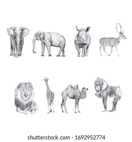 Set of animal drawings isolated on white background. African elephant, Asian elephant, rhino, deer, lion, giraffe, camel, mandrill monkey. Hand drawn pencil illustrations. Beautiful animal graphics.