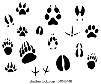 Set of animal footprints for ecology design or logo template. Jpeg version also available in gallery