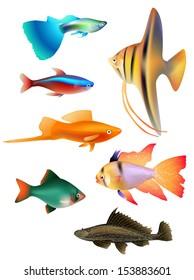 set of aquarium fishes