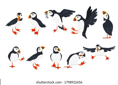 Set of atlantic puffin bird in different poses cartoon animal design flat illustration isolated on white background