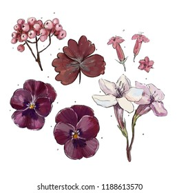 set of autumn flowers, pansies, bell, ashberry, leaf, petunia