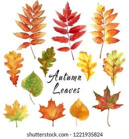 Set autumn leaves.
