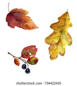 Set of autumn leaves, watercolor illustration