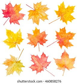 Set of autumn maple leaves. Hand drawn watercolor painting.