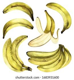 Set of bananas drawn on paper. Summer fruit pattern. Exotic plants. Cute hand-drawn postcard.
