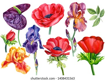 Set of beautiful flowers, anthurium, anemone, irises on an isolated white background, watercolor illustration, hand drawing, botanical painting