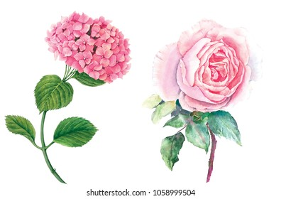 Set of beautiful flowers (pink hydrangea and pink rose with green leaves) watercolor illustration isolated on white background suitable for wedding greeting card or floral design