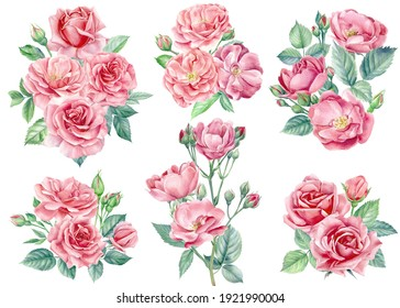 Set of beautiful flowers. Rose floral elements on a white background, watercolor painting