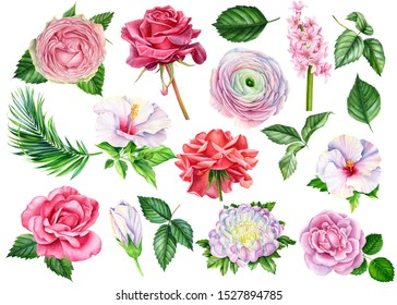 Set of beautiful flowers, roses, ranunculus, hibiscus, leaves, hyacinth, chrysanthemum, palm leaf on an isolated white background. Watercolor painting hand drawing, botanical illustration