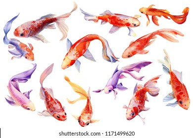 set of beautiful orange fish, a collection of carp koi on a white background, watercolor drawing, flowers, leaves, bud and seeds