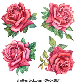 Set of beautiful roses and leaves, watercolor illustration