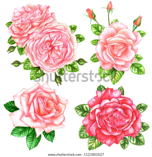 Set of beautiful roses on isolated white background. Watercolor and marker art. Botanical Illustration. Perfect for element for design, print, greeting card, wedding.