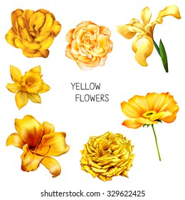 Set of beautiful yellow, orange flowers: bright Rose, Camellia Flower, iris and lily flower, Daffodil flower or narcissus, poppy flower isolated on white background