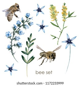 Set with bees and wildflowers. Isolated on white background. Watercolor illustration