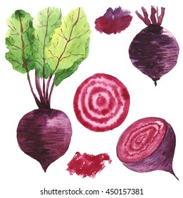 Set the beets. Watercolor food. Vegetable.