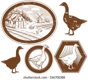 Set of bio farm labels, rural landscape, agriculture, farming. Raster version