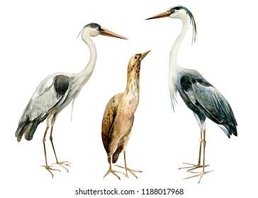set birds bittern, heronon isolated white background, watercolor illustration