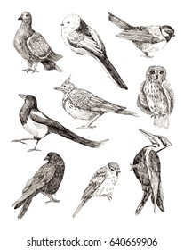 Set of birds, line drawings, ink drawing, hand drawn illustration.Owl, raven, dove, sparrow, magpie, bluebird, skylark, woodpecker. Isolated on white background