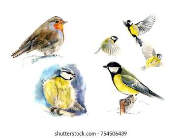 Set of birds:  Robin, blue tit, Great tit,  sitting and in flight.  Watercolor sketch, isolated