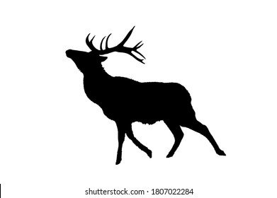 Set of black silhouette of a deer isolated on a white background.