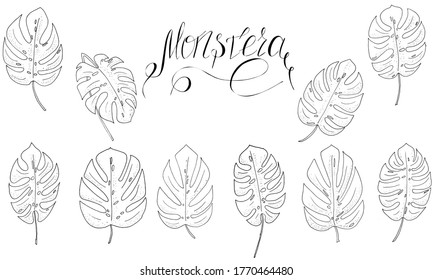 set of black and white monstera leaves and lettering for textile, print, raster copy