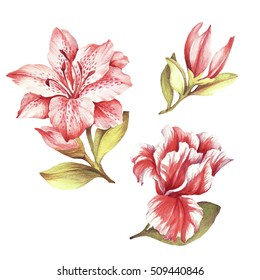 Set with blooming lilies. Hand draw watercolor illustration.