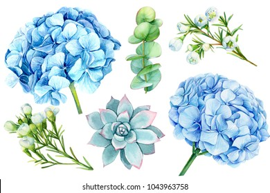 set of blue flowers, hydrangeas, eucalyptus, succulent, watercolor illustration