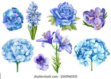 set of blue flowers, rose, lily, hyacinth, pansies, hydrangeas, crocuses, succulent, watercolor illustration