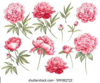 Set of botanic floral elements. Red flowers collection with leaves and flowers, drawing watercolor. Set of flowers isolated over white background.