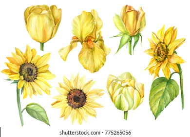 Sunflower Drawing Images Stock Photos Vectors Shutterstock