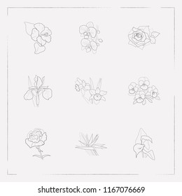 Set of botany icons line style symbols with pansy, orchids, iris and other icons for your web mobile app logo design.
