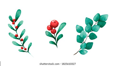 Set of branch with winter berries isolated on white.