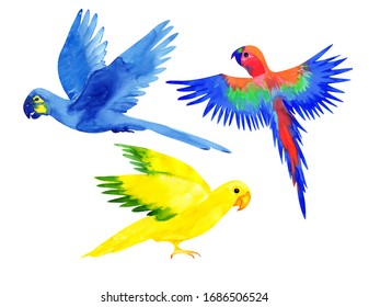 set of Brazilian parrots: Multi-colored macaw, hyacinth macaw, Golden artinga, isolated on a white background. Watercolor painted birds