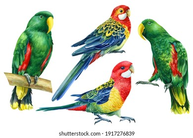 Set with bright birds, parrots on an isolated white background, watercolor botanical painting
