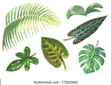 Set of bright tropical exotic plants isolated on white background. Watercolor hand drawn botanical illustration. Phalaenopsis Orchid, Palm, Monstera, Philodentron.
