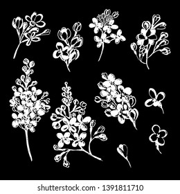 Set with buds and branches of lilac. Lilac in different angles. White flowers on a black background. Manual graphics, tracing. For textile, design, decoration, wedding.