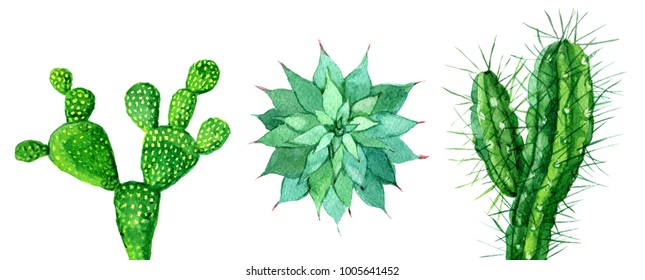 Set of cactus isolated on white background, watercolor illustration