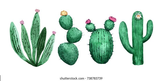 Set of cactus. Watercolor hand painted illustration
