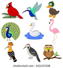 Set of cartoon funny birds.  Birds collection.  Duck, hummingbird, flamingo, cardinal, peacock, owl, woodpecker, hoopoe, swan. Preschool education.